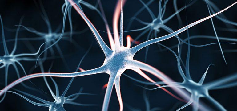 plasticite-cerebrale
